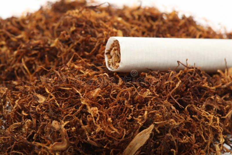 Cigarette sur le tabac photos stock