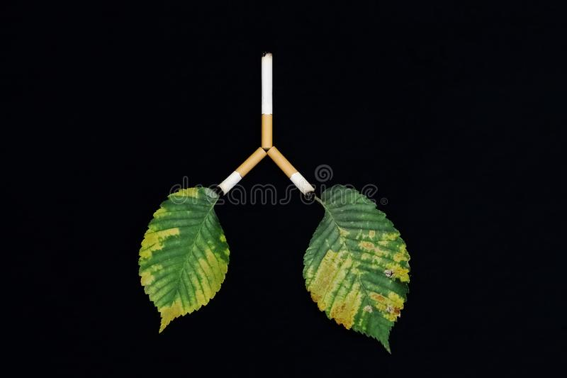 Leaves as symbol of the lungs of man and planet Earth affected by tobacco smoke, carcinogens and cigarettes on black background. Cigarettes trachea and bronchi stock images