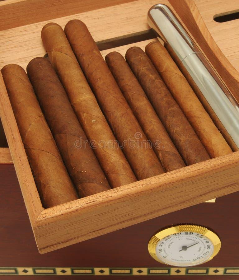 cigarrhumidor royaltyfria foton
