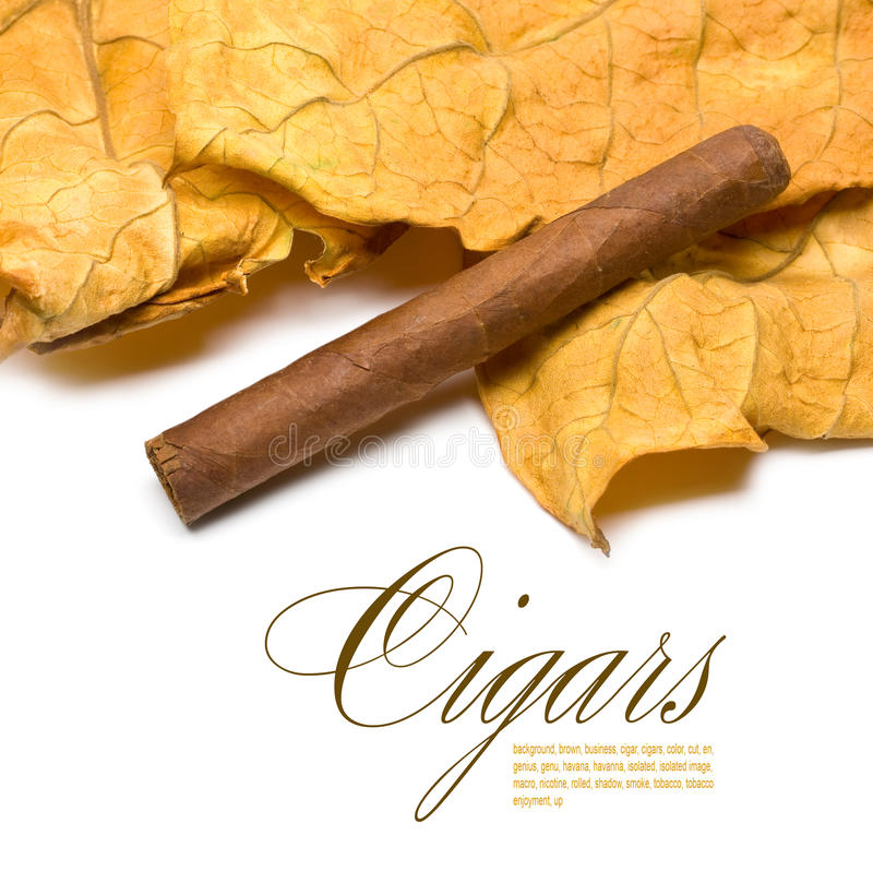 Cigarro y hoja imágenes de archivo libres de regalías