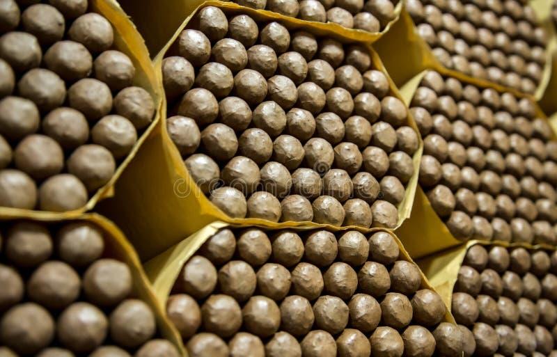 Cigarros dominicanos en un humidor común foto de archivo libre de regalías