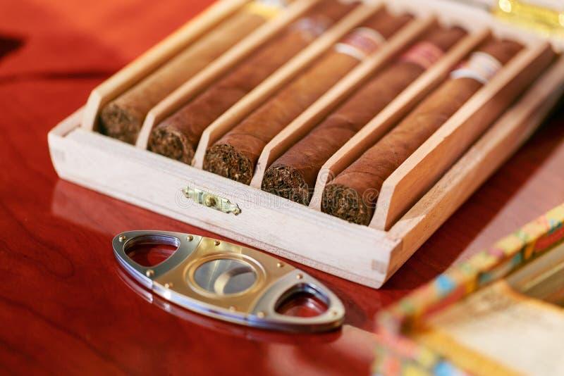 Cigarrskärare och cigarrer i humidorträask arkivfoto