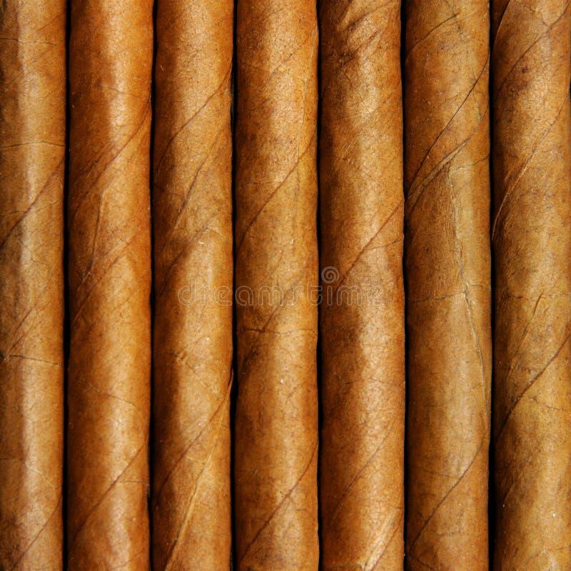 Download Cigars stock photo. Image of health, addiction, cigarette - 6134040