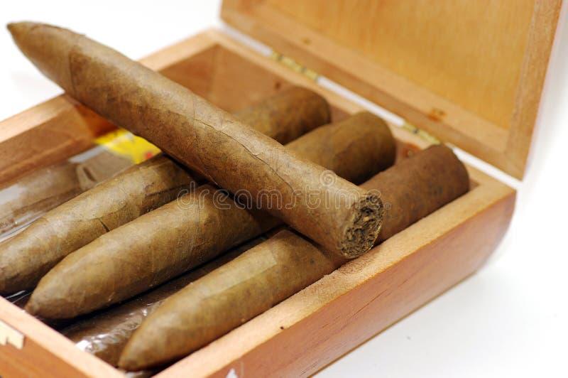 Cigars in box. royalty free stock photos