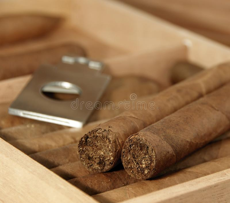 Download Cigars in open humidor stock photo. Image of tobacco - 14606956