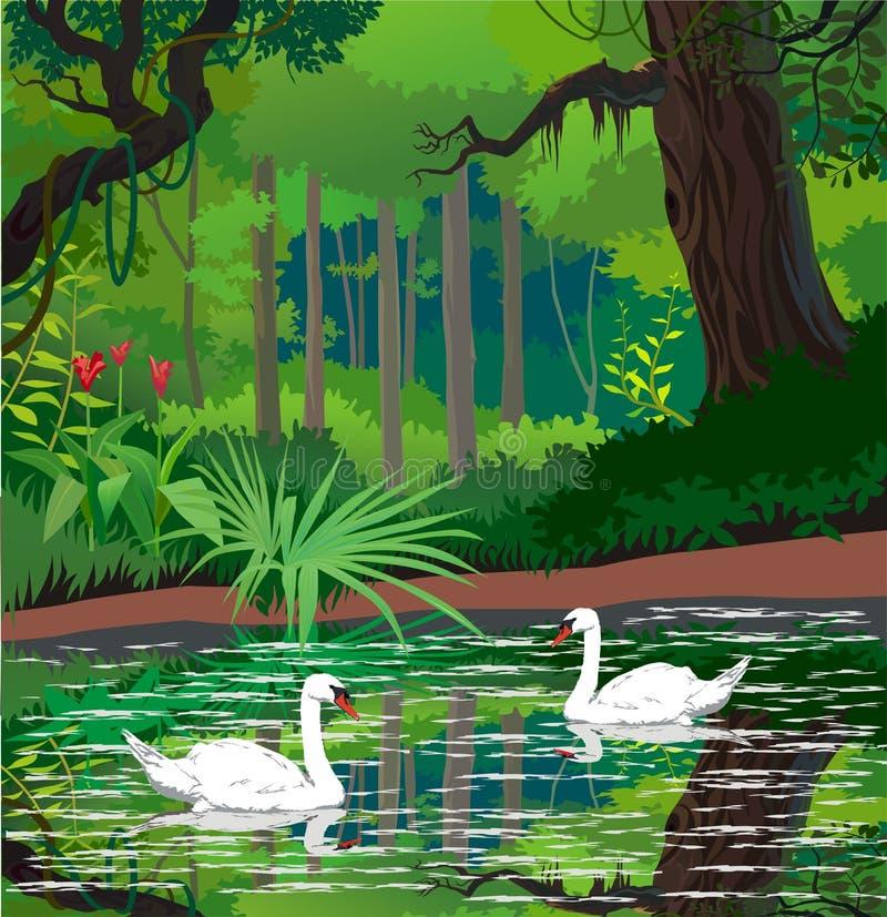 Cigni su uno stagno della foresta illustrazione vettoriale