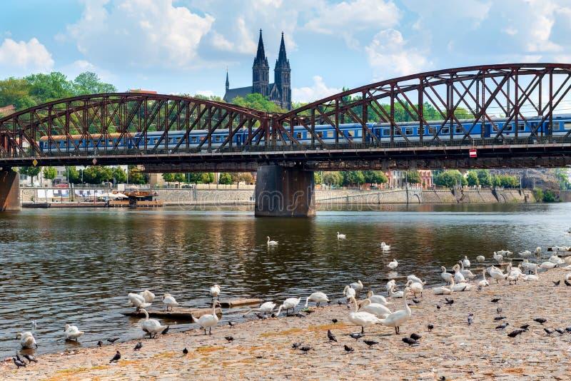 Cigni vicino al ponte ferroviario immagine stock libera da diritti