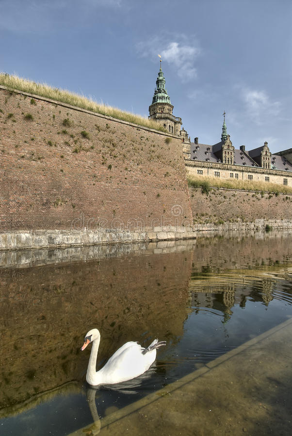 Cigno al castello del Hamlet di Kronborg immagini stock