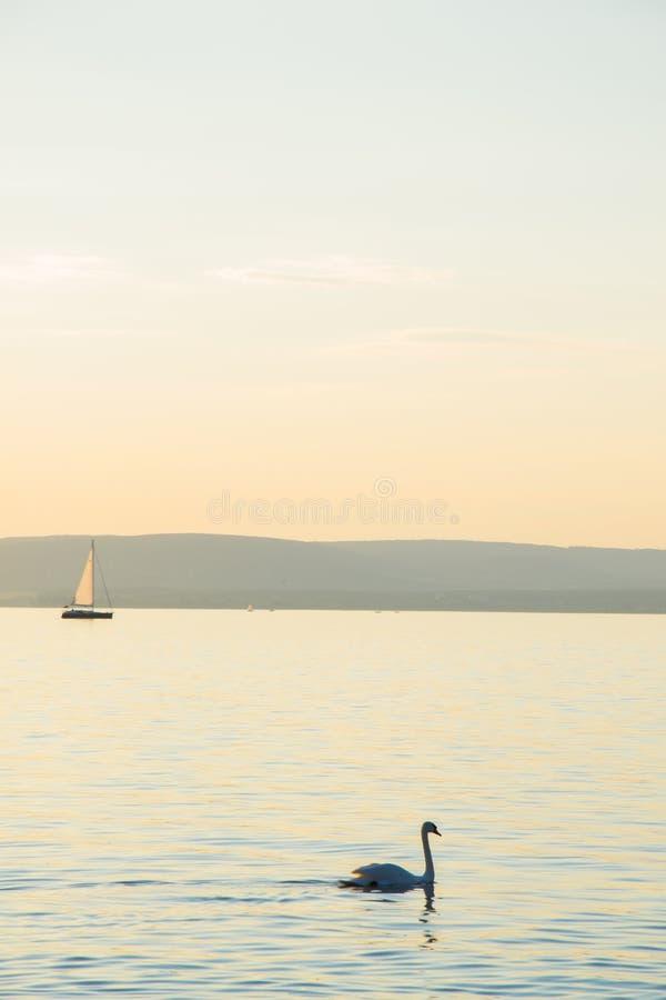 Cigno su Balaton fotografie stock libere da diritti
