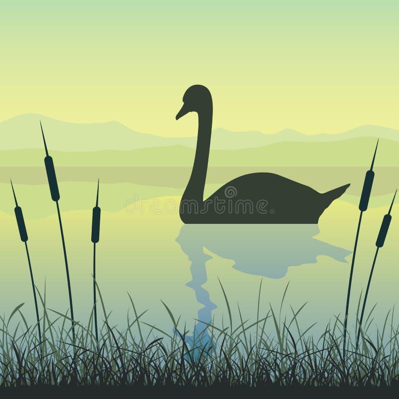 Cigno sul lago illustrazione di stock