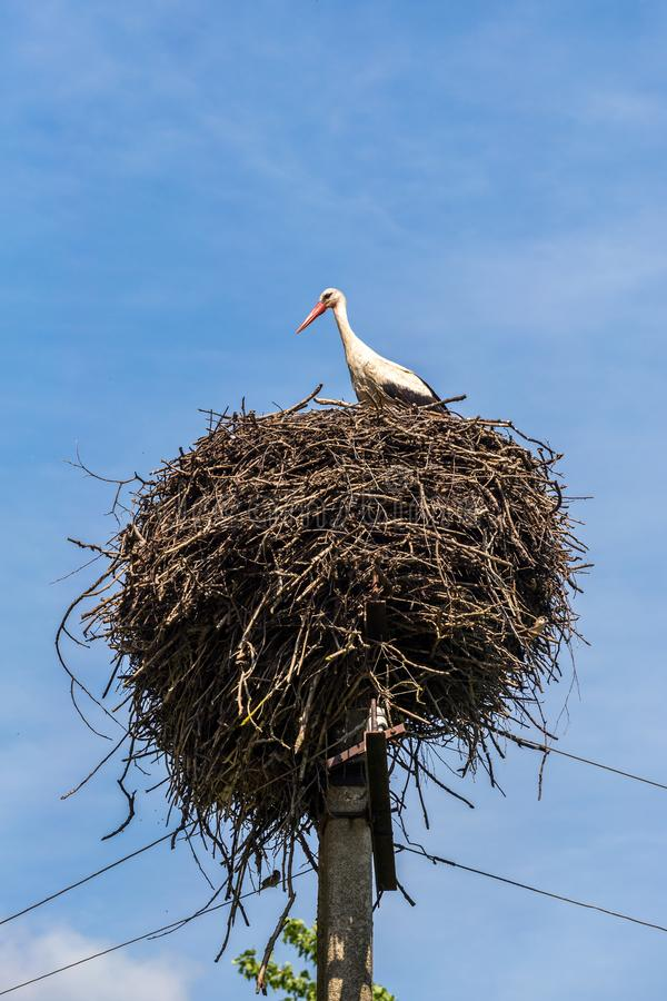 Cigogne blanche dans un nid sur un poteau photographie stock libre de droits
