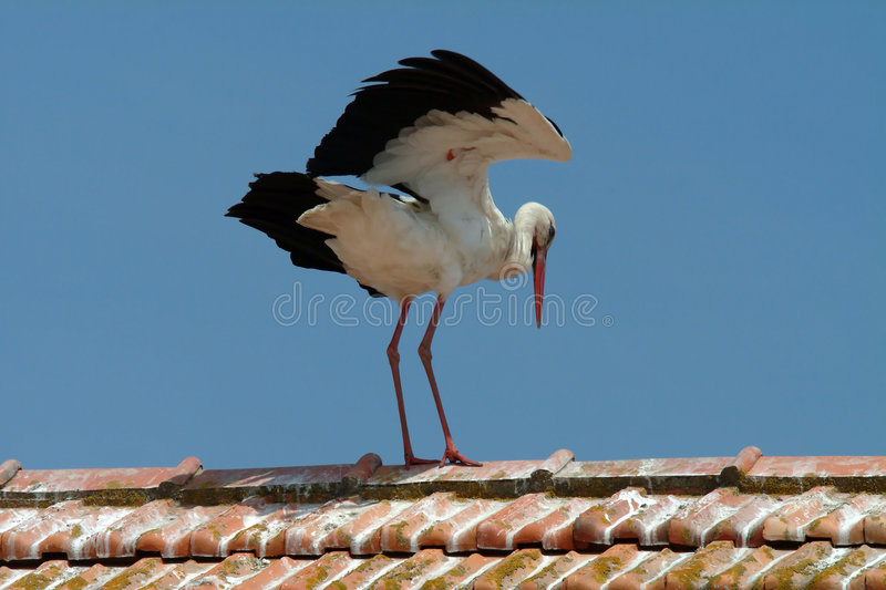 Cigogne blanche sur le toit photos stock