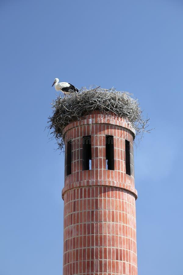 Cigogne dans l'emboîtement photos libres de droits