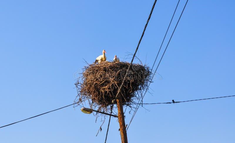 Cigogne dans le nid au-dessus du beau ciel bleu d'?t? Ciel bleu photographie stock