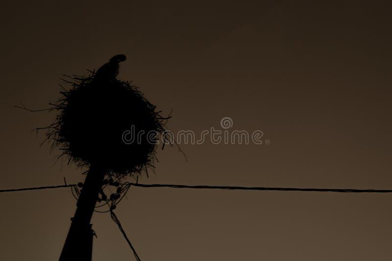Cigogne dans le nid sur une ligne ?lectrique Oiseau gracieux photo stock