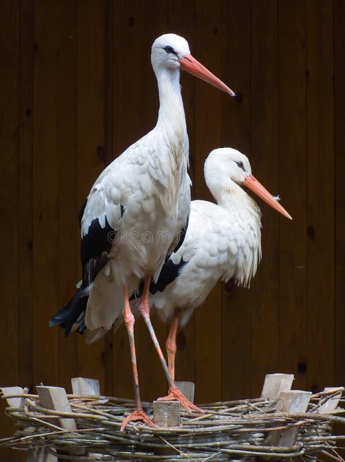 Cigogne de couples photos libres de droits