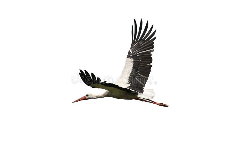 Cigogne de vol images stock