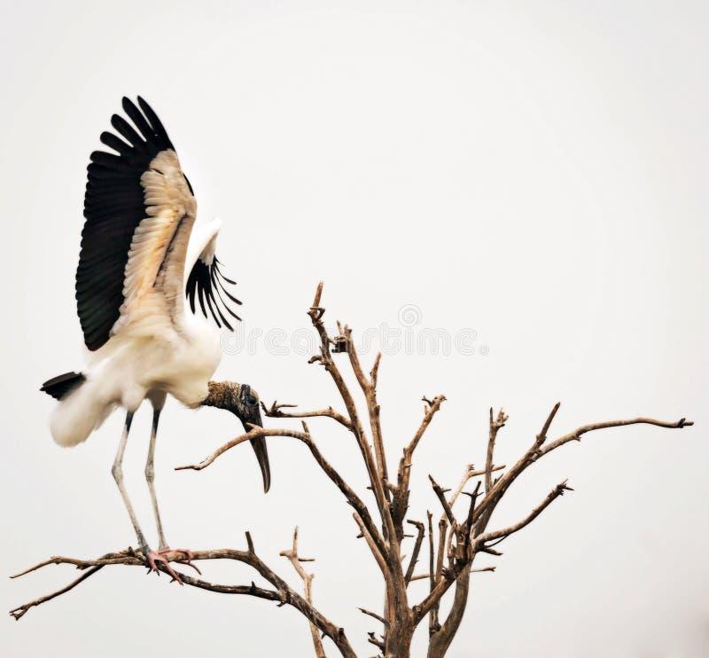 Cigogne en bois dans l'arbre photos libres de droits