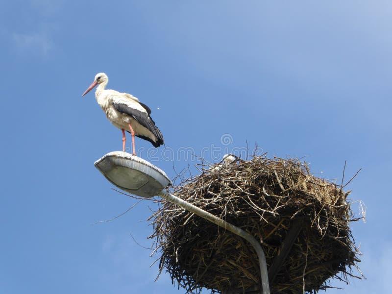 Cigogne sur le réverbère par le nid sur le fond de ciel bleu en Pologne images libres de droits