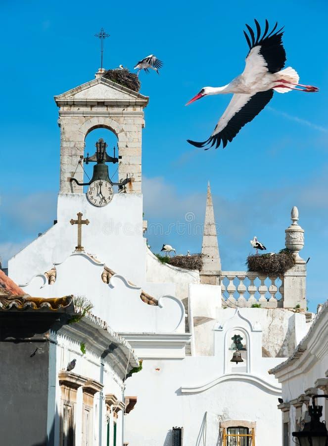 Cigognes blanches à Faro, Portugal photos stock