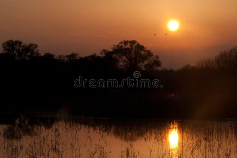 Cigognes dans le lac photographie stock libre de droits