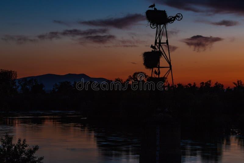 Cigognes de coucher du soleil et la rivi?re photos stock