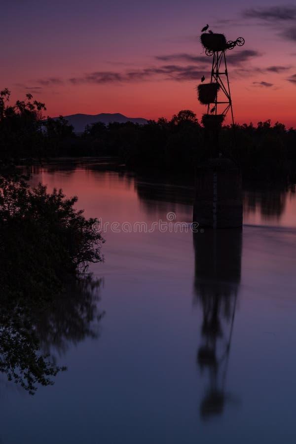 Cigognes de coucher du soleil et la rivi?re photo libre de droits