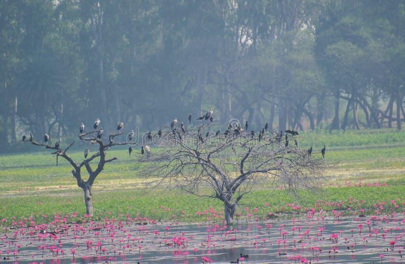 Cigognes et cormorans sur un arbre dans le marécage image libre de droits