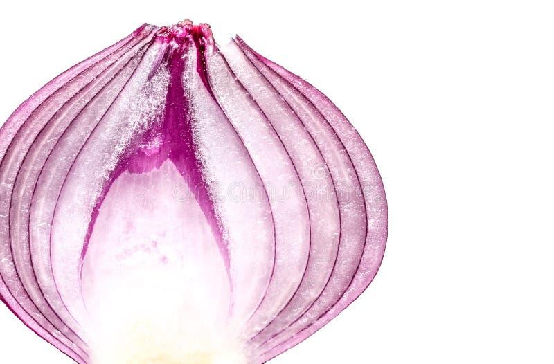 Ciie w przyrodniego purpurowej cebuli zakończenia makro- odosobnionym fotografia royalty free