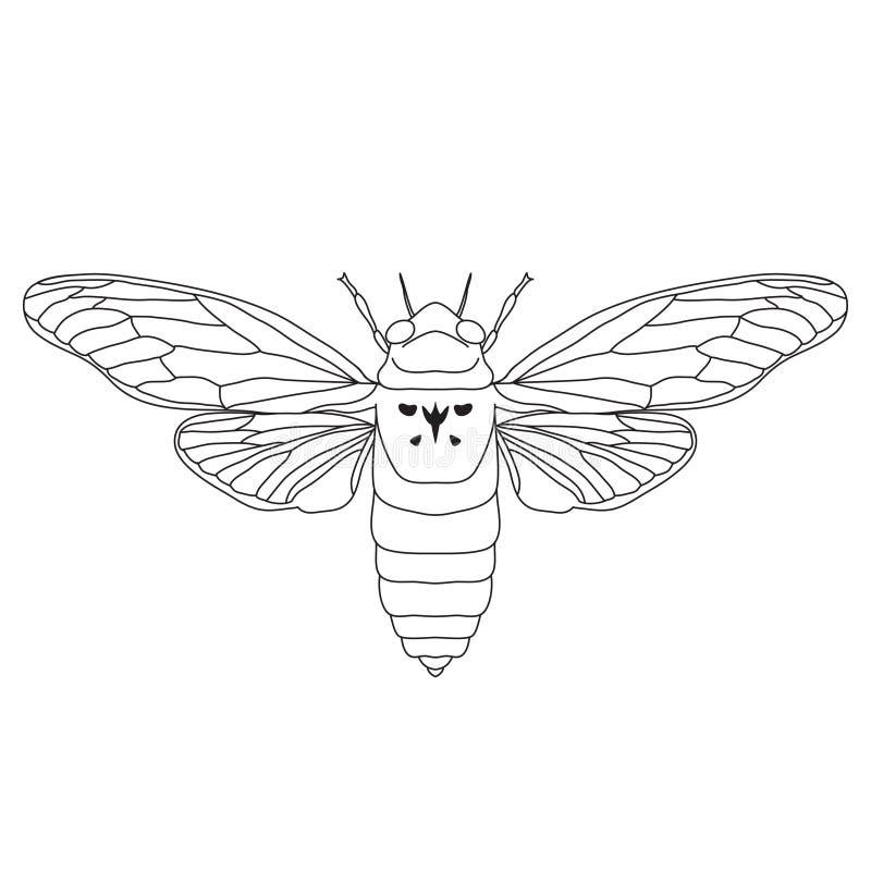 Cikada Cicadidae Skissa av cikada Cikada stock illustrationer