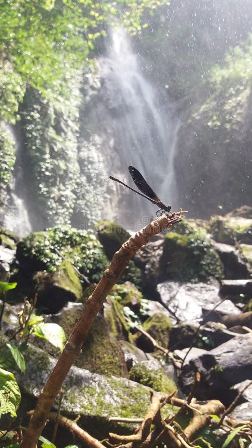 cikaracak Wasserfall lizenzfreie stockbilder