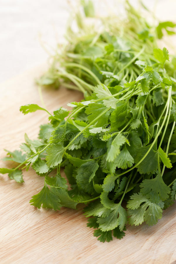 cilantro свежий стоковое фото