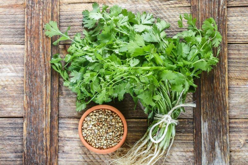 Cilantro verde fresco, hojas del coriandro y semillas secas fotografía de archivo
