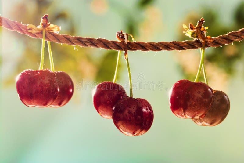 Ciliege sulla corda nel giardino il giorno soleggiato immagine stock