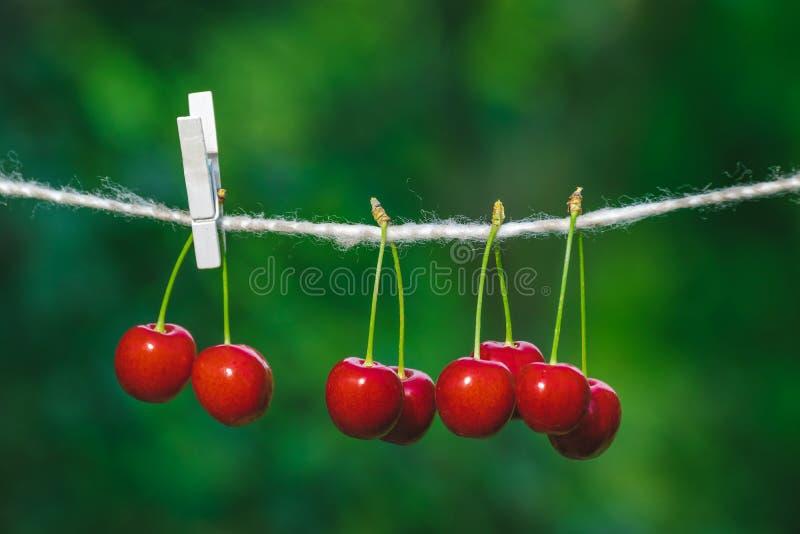 Ciliege sulla corda nel giardino un giorno soleggiato immagine stock