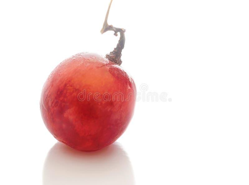 Ciliegia dell'uva rossa isolata fotografie stock libere da diritti