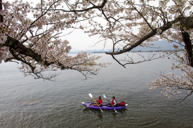 Ciliegia di Tientsin Osaki di mar del Giappone fotografia stock