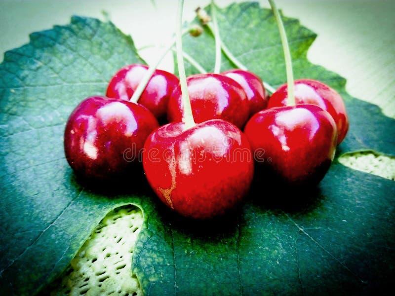 Ciliegie brillanti sulla foglia dell'uva immagine stock