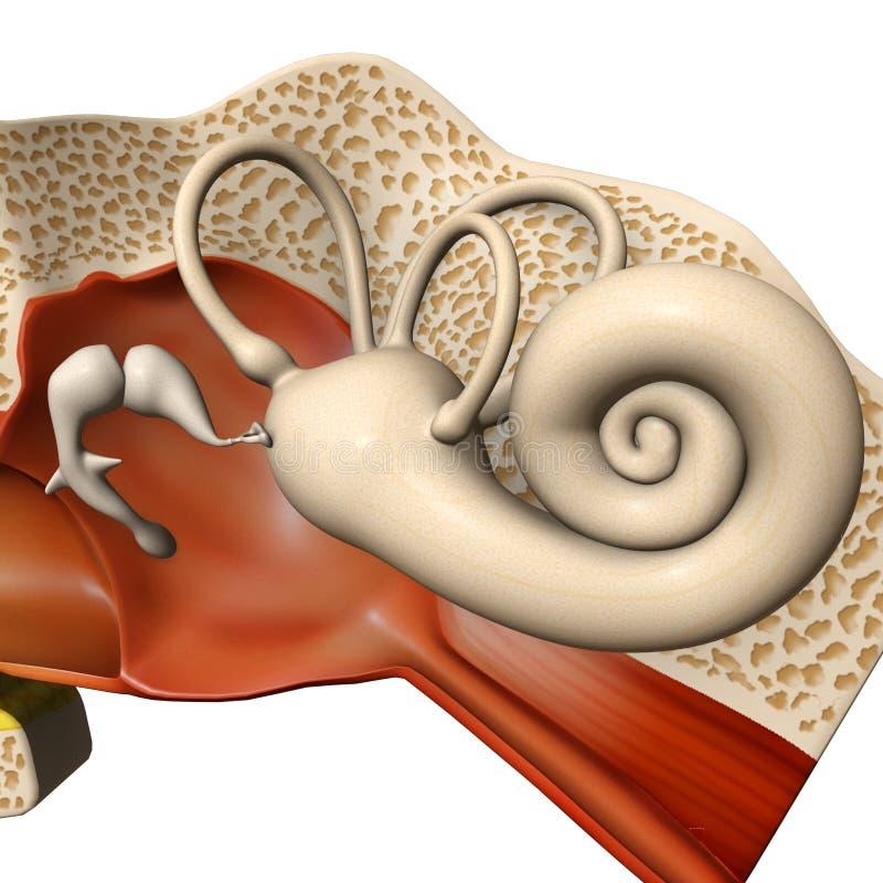 Cilindro de orelha ilustração royalty free