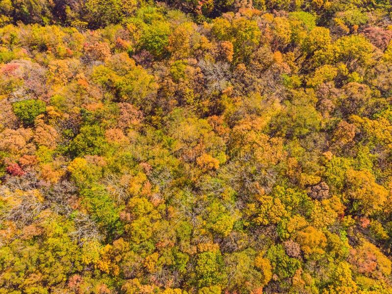 Cima aerea gi? la vista della foresta di autunno con gli alberi verdi e gialli Bella caduta mista della foresta di conifere e dec fotografia stock