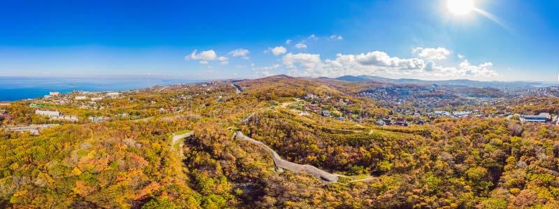 Cima aerea gi? la vista della foresta di autunno con gli alberi verdi e gialli Bella caduta mista della foresta di conifere e dec fotografia stock libera da diritti
