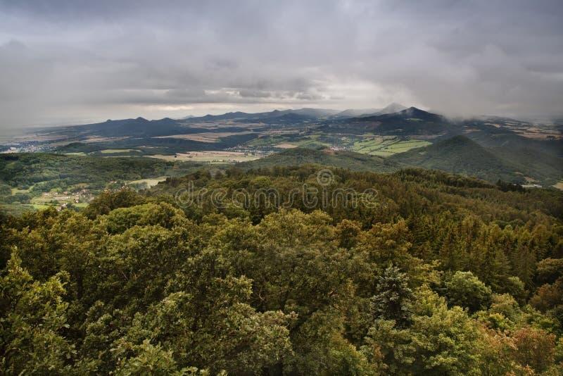 Cima degli alberi verdi spessi fotografie stock