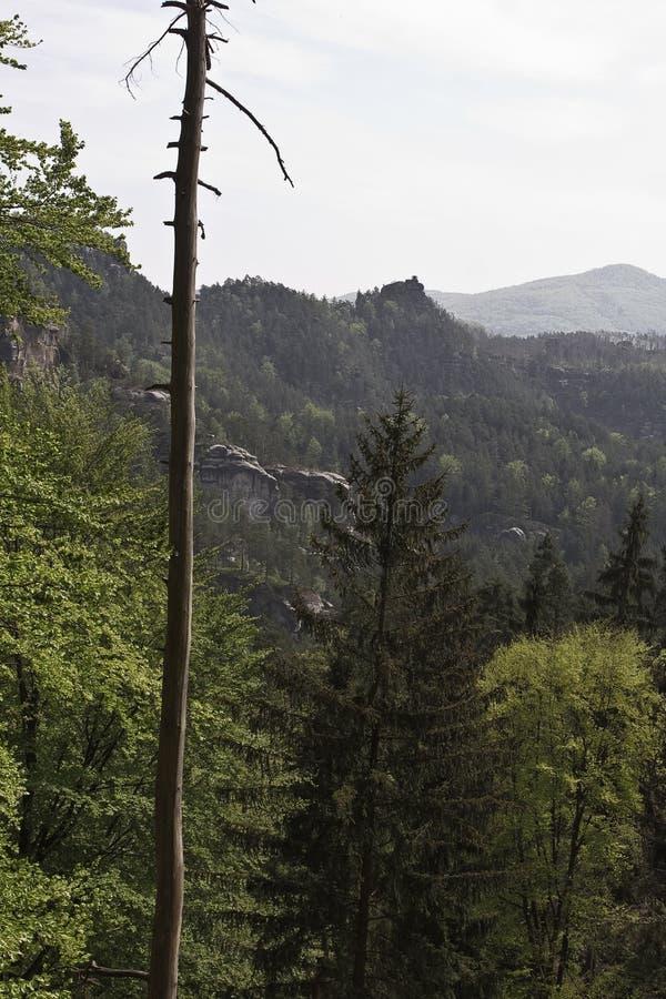 Cima della montagna del materiale di riempimento dei pini fotografie stock libere da diritti