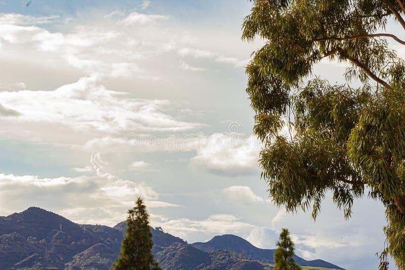 Cime con cielo dei pendii di collina di Griffith Park il grande del cumulo, nuvole del pino e dell'eucalyptus di nimbus immagini stock
