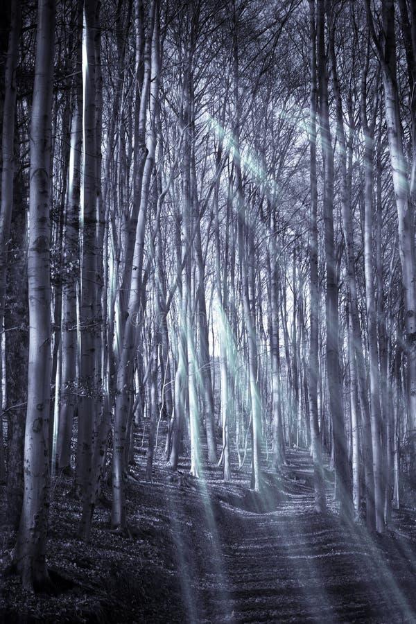 Download Cime D'albero E Circuiti Di Collegamento Immagine Stock - Immagine di fantasia, foresta: 7304643