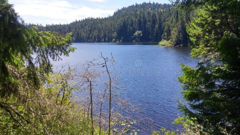 Cime dell'albero e del lago immagine stock