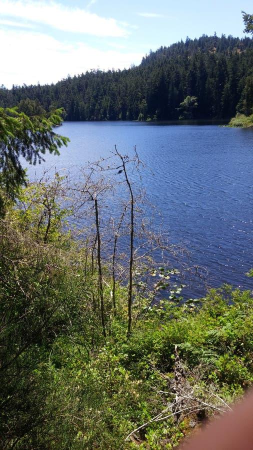 Cime dell'albero e del lago immagini stock libere da diritti