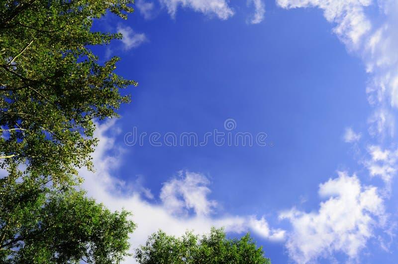 Cime dell'albero su cielo blu fotografie stock libere da diritti