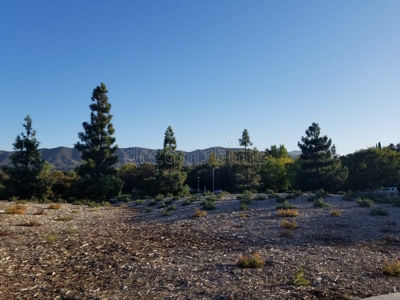 Cime gemellate dell'albero di querce fotografia stock libera da diritti