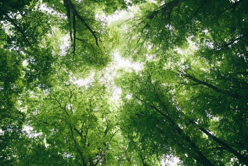 Cimes d'arbre dans la for?t image libre de droits